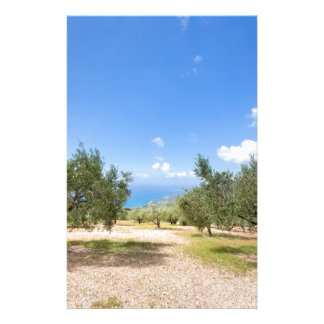 Orchard with olive trees at sea in  Greece Stationery