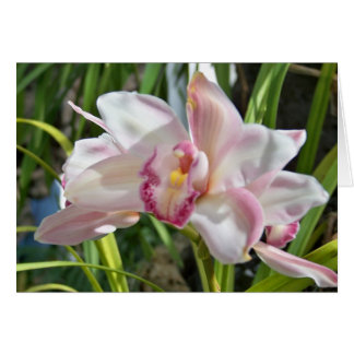 orchid 2 card