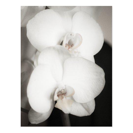Orchid 8931 postcard