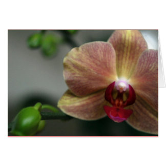 Orchid and Bud Card