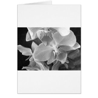 Orchid blooms closeup in grayscale card
