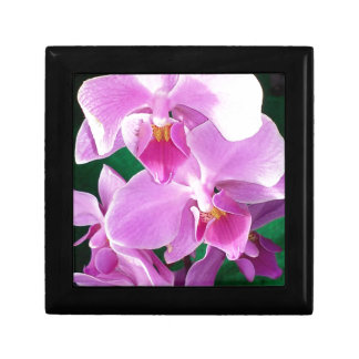 Orchid blooms closeup in pink gift box