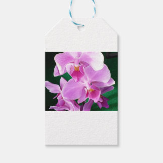 Orchid blooms closeup in pink gift tags