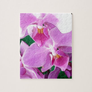 Orchid blooms closeup in pink jigsaw puzzle