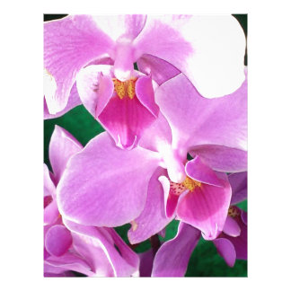 Orchid blooms closeup in pink letterhead