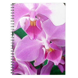 Orchid blooms closeup in pink notebook