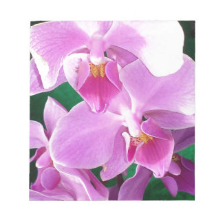 Orchid blooms closeup in pink notepad