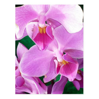 Orchid blooms closeup in pink postcard