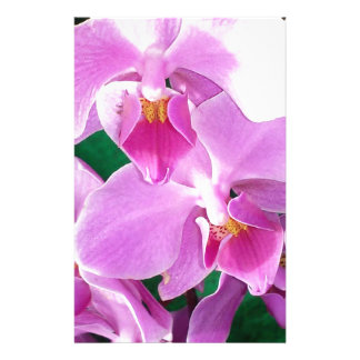 Orchid blooms closeup in pink stationery