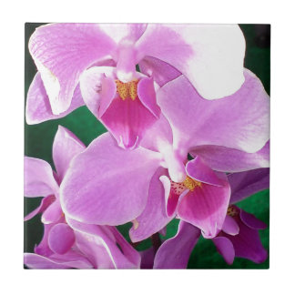 Orchid blooms closeup in pink tile