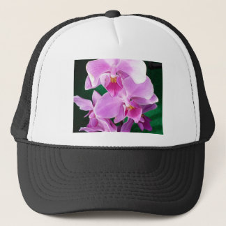 Orchid blooms closeup in pink trucker hat