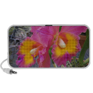 orchid boom! travelling speaker