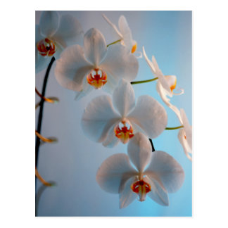 Orchid Branch Postcard