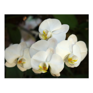 Orchid Bunch Postcard
