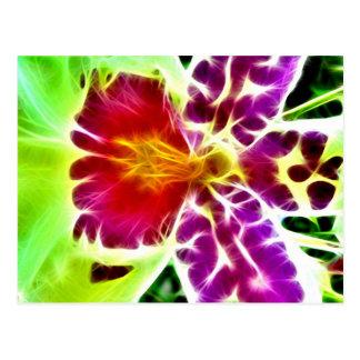 Orchid burst postcard