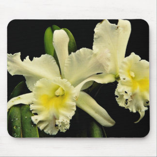 Orchid cattleya (Deesse Charles)  flowers Mouse Pad