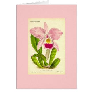 Orchid - Cattleya Gaskeliana Card