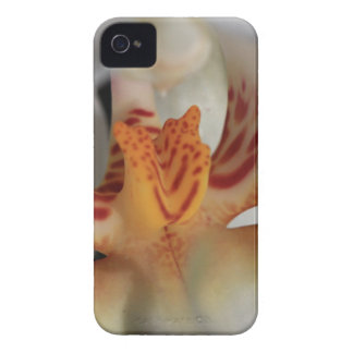 Orchid Closeup iPhone 4 Cover