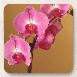 orchid coaster