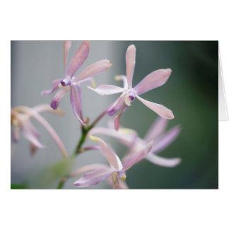 Orchid Darwinara Charm 'Blue Pacific' Card