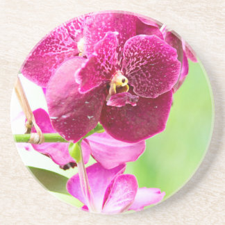 orchid drink coasters
