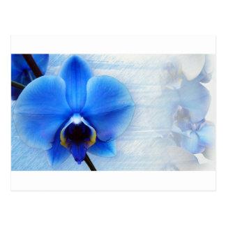 Orchid Flower Blue Love Peace Destiny Gift Postcard