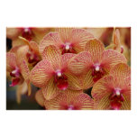 Orchid Flower Poster