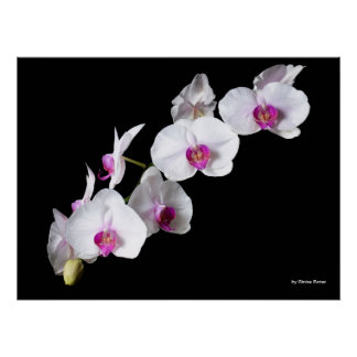 Orchid-flowers, by Sinisa Botas Poster