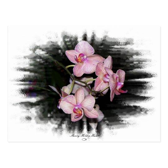 Orchid Frame 1 Postcard