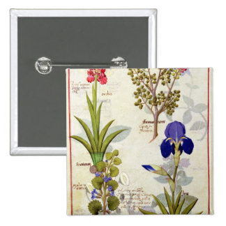Orchid & Fumitory or Bleeding Heart Hedera & Iris 2 Inch Square Button