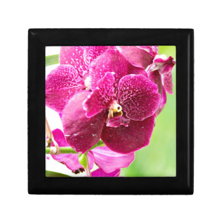 orchid gift box