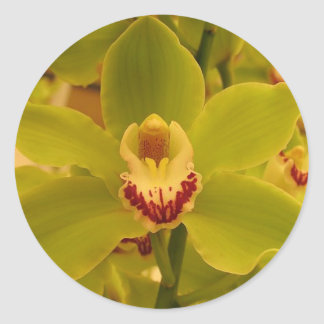 Orchid  Green Cymbidium Classic Round Sticker