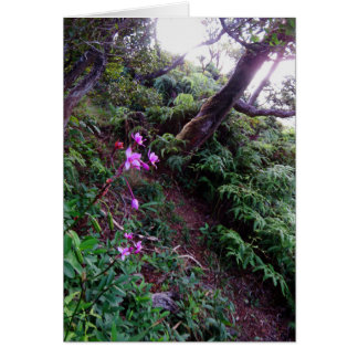 Orchid Hiking Trail Card