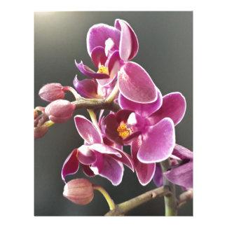 orchid letterhead