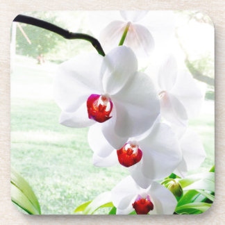 orchid love drink coasters