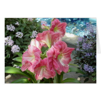 Orchid, National Botanic Garden, Washington, DC Card