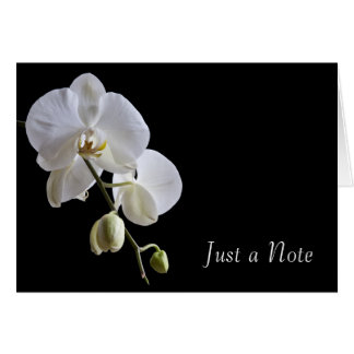 Orchid on Black Just a Note Card