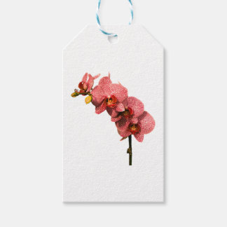 Orchid Party Personalize Destiny Destiny'S Pack Of Gift Tags