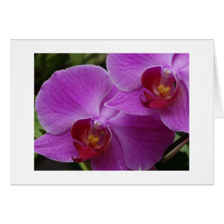 Orchid Perfection Card