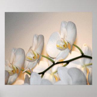 Orchid Phalae Sogo Art Print -24x20 -or smaller