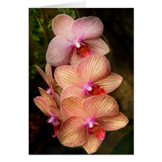 Orchid - Phalaenopsis - A set of beauties Card