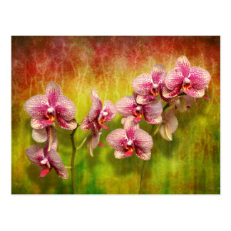 Orchid - Phalaenopsis - Simply a delight Postcard