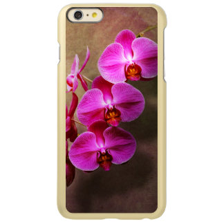 Orchid - Phalaenopsis - The moth orchid