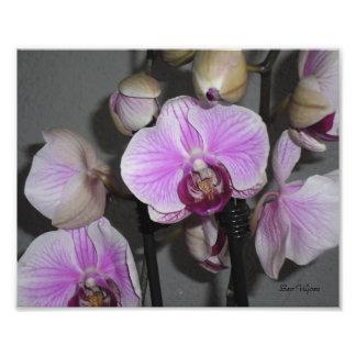 Orchid Photo Art