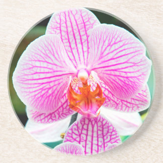 Orchid Pink Tropical Asian Flower Drink Coaster