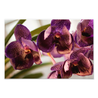 Orchid Vanda Pure's Wax Flower Group Photo