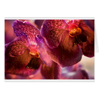Orchid Vanda Pure's Wax Flowers Card