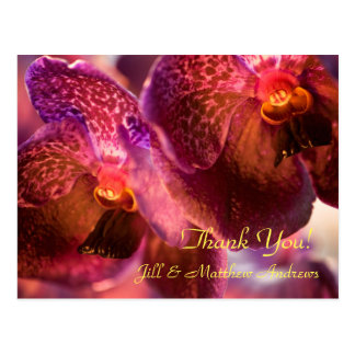 Orchid Vanda Pure's Wax Flowers Postcard