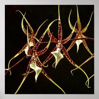 Orchidée d'araignée poster