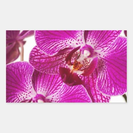 Orchidée de Dendrobium de roses indien - arrière - Sticker Rectangulaire